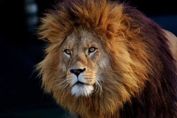 הקשר בין אריה לדיאטה